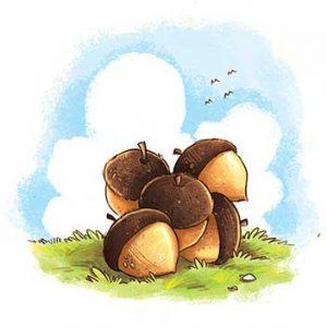 Pile of acorns